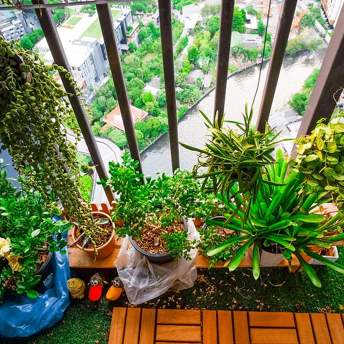 balkon groen planten