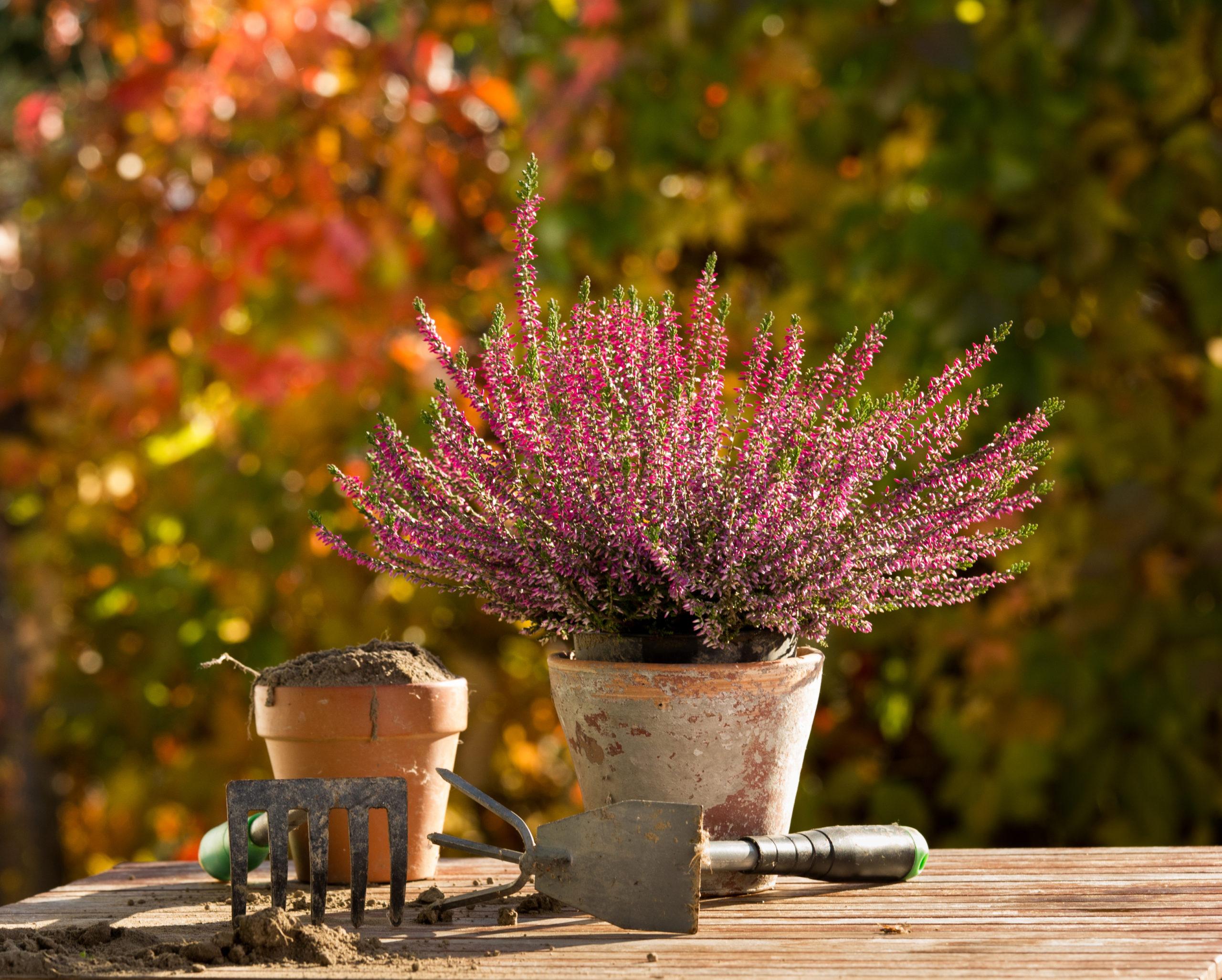 herfst tuin planten