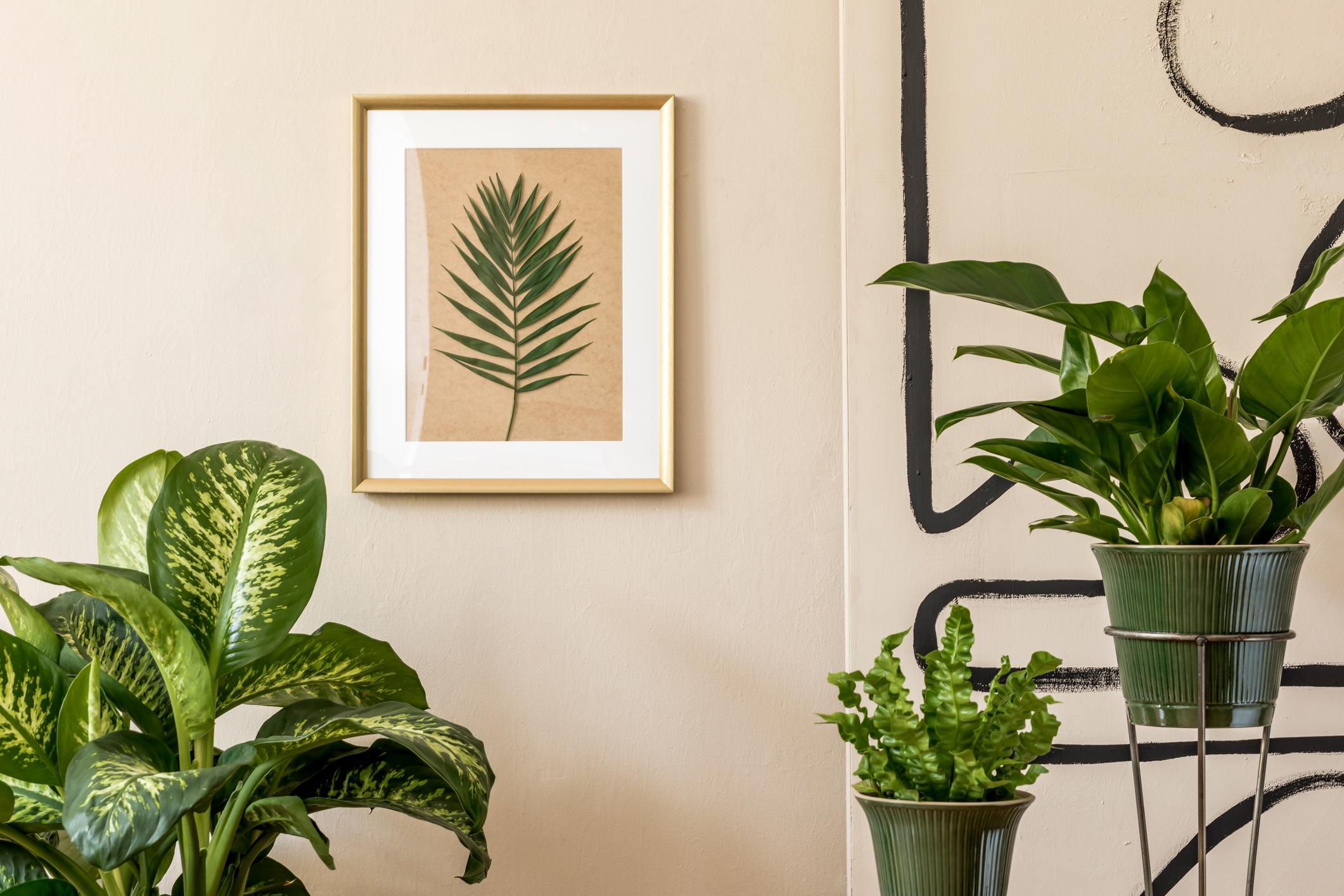 Kamerplanten zorgen voor kleurrijk interieur
