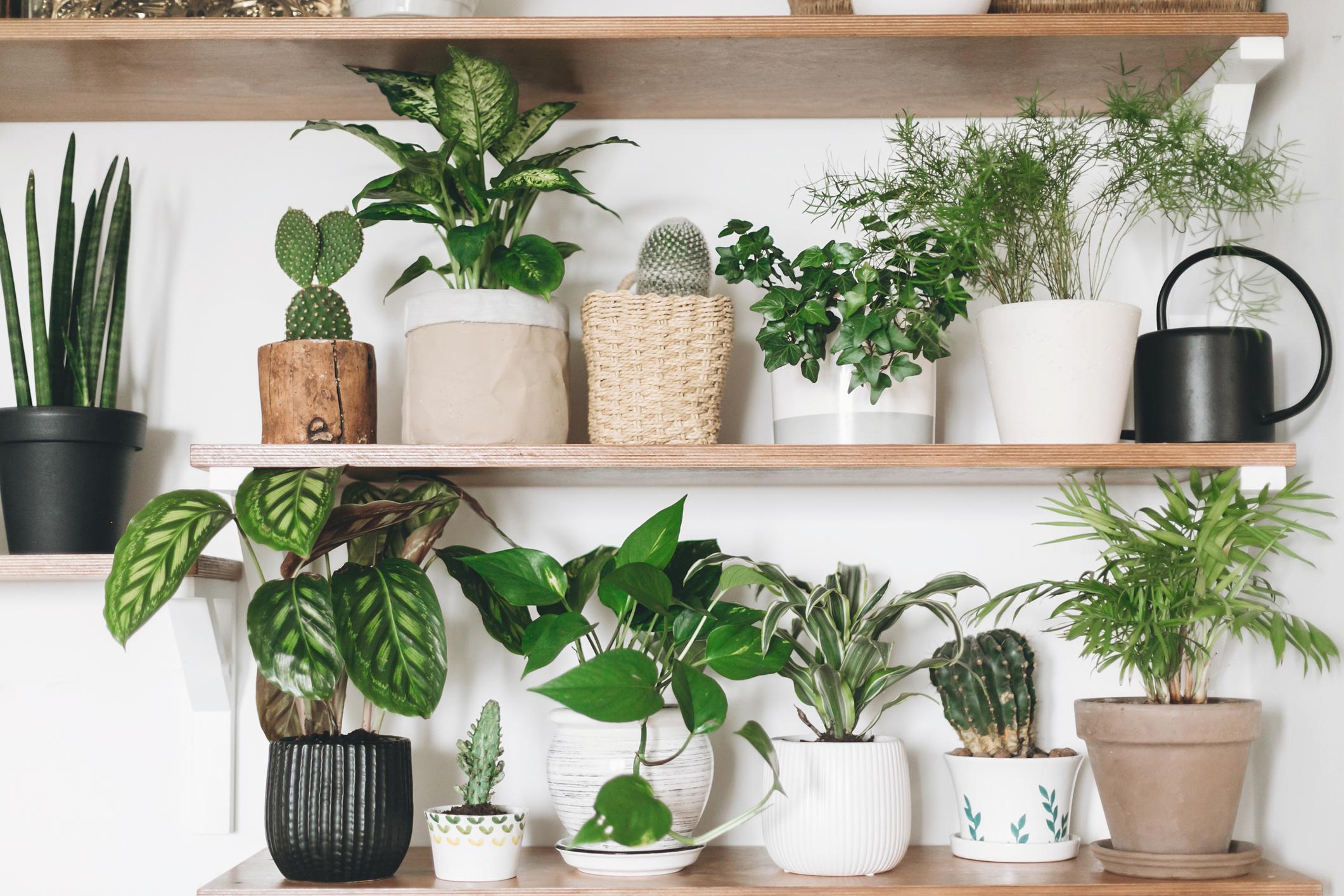 duurzaam interieur met planten
